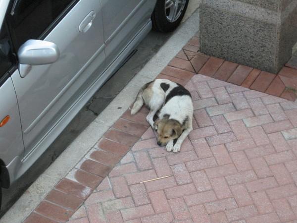 另一隻狗狗