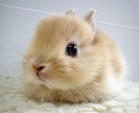 japanese-bunny1.jpg