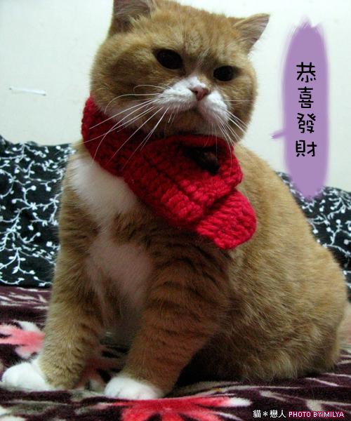 20081215-恭喜發財新年快樂02