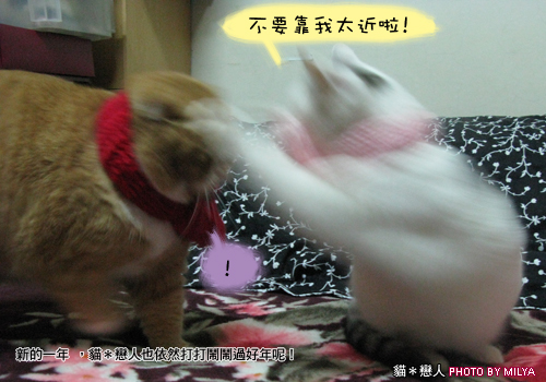 20081215-恭喜發財新年快樂04