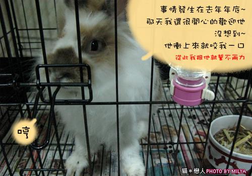 20090108-兔崽子02