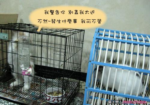 20090108-兔崽子03