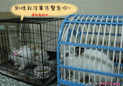 20090108-兔崽子04