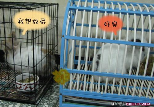 20090108-兔崽子05