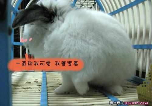 20090108-兔崽子06