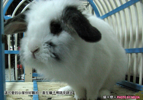20090108-兔崽子07