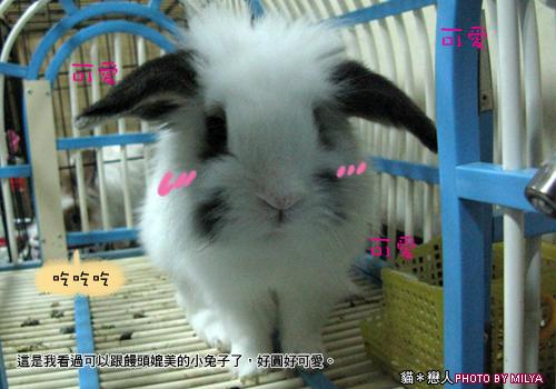 20090108-兔崽子08