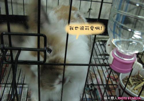 20090108-兔崽子09