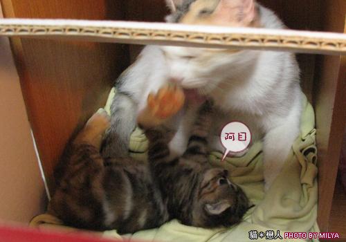 20090329-柑仔與米漿23