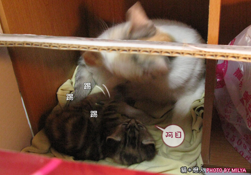 20090329-柑仔與米漿24