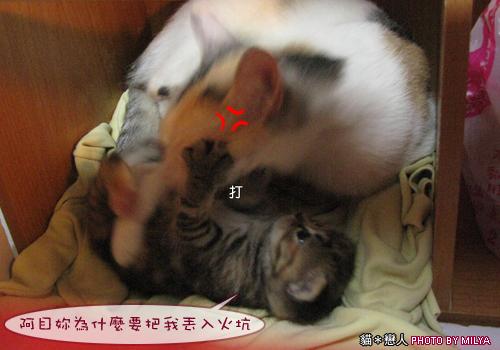 20090329-柑仔與米漿26