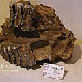 SAM_0543.JPG