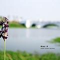 台南都會公園奇美博物館21.JPG