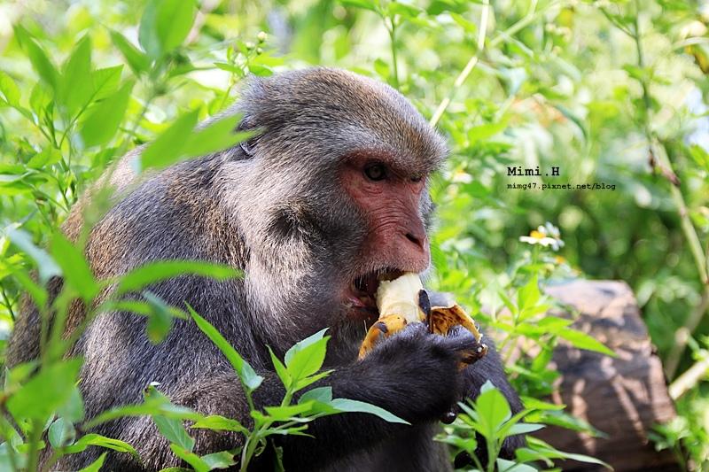 南化烏山彌猴25.JPG