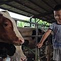 乳牛的家6.JPG