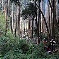 南投鹿谷忘憂森林5.JPG