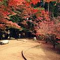 福壽山楓葉1.JPG
