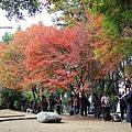 福壽山楓葉3.JPG