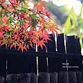福壽山楓葉13.JPG