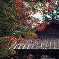 福壽山楓葉14.JPG