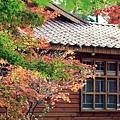 福壽山楓葉39.JPG