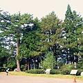 福壽山楓葉44.JPG