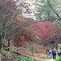 福壽山楓葉50.JPG