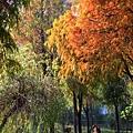 巴克禮公園36.JPG