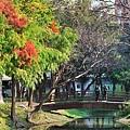 巴克禮公園14.JPG