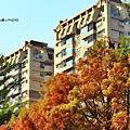巴克禮公園17.JPG
