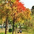 巴克禮公園20.JPG