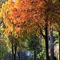 巴克禮公園21.JPG