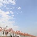 白河木棉花25.JPG