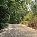 銅鑼自行車道2.JPG