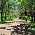 台東森林公園30.JPG