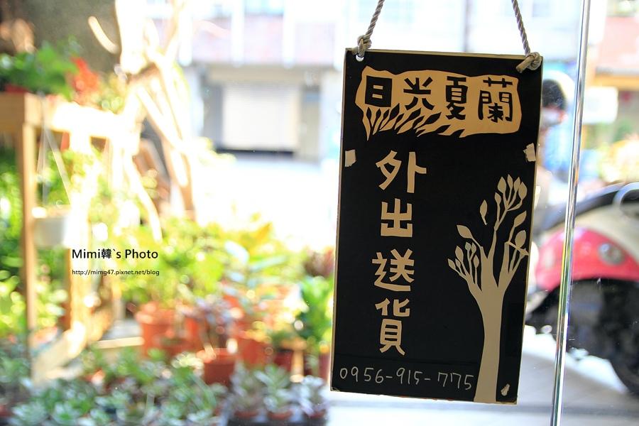 日光夏蘭2.JPG