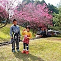 九族櫻花祭2.JPG
