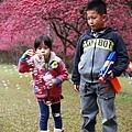 九族櫻花祭7.JPG