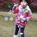九族櫻花祭10.JPG