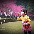 九族櫻花祭11.JPG