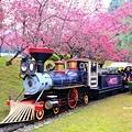 九族櫻花祭18.JPG