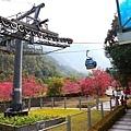 九族櫻花祭22.JPG