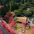 九族櫻花祭23.JPG