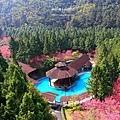 九族櫻花祭25.JPG