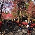 九族櫻花祭29.JPG