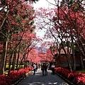 九族櫻花祭31.JPG