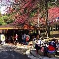 九族櫻花祭32.JPG