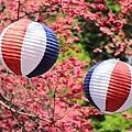九族櫻花祭34.JPG