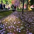 九族櫻花祭45.JPG