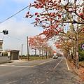 台南佳里木棉花道12.JPG